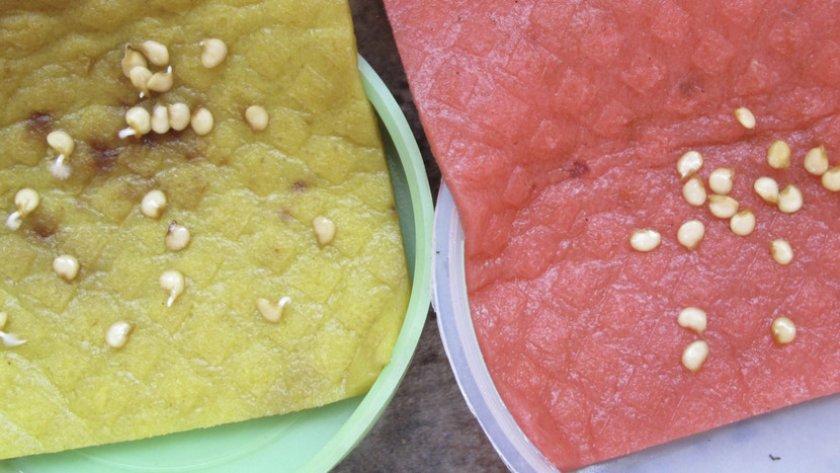 Подготовка семян перца