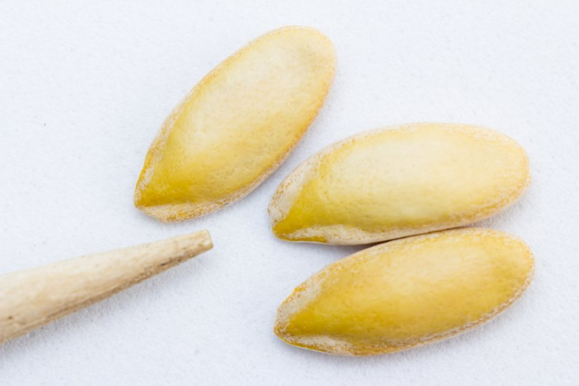 Состав дынных семян