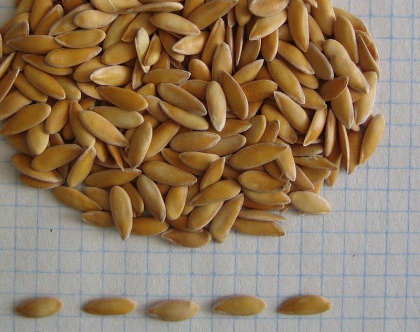 Польза семян дыни для мужчин