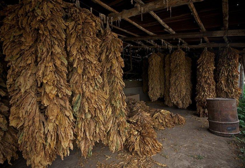 Хранение табака после сушки