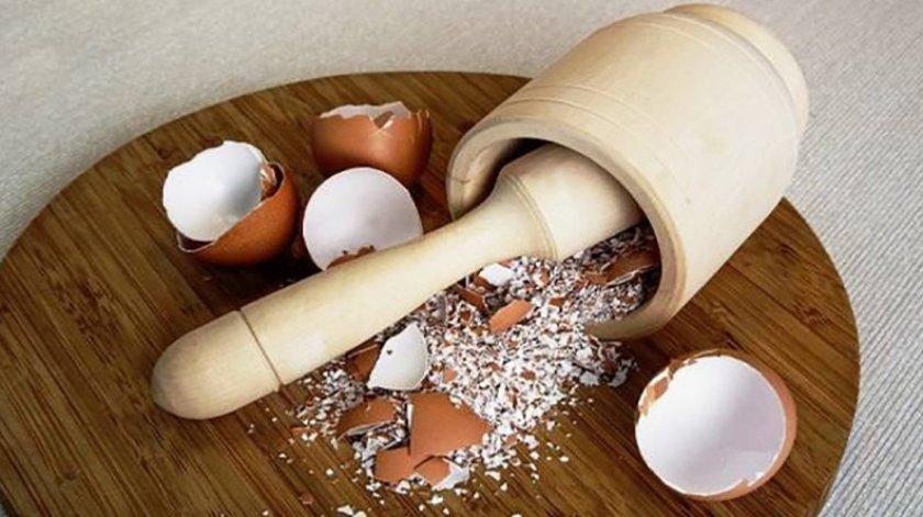 Яичная скорлупа для подкормки
