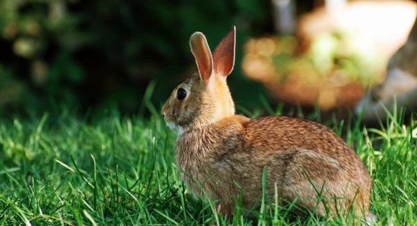 Лечение кокцидиоза у кроликов йодом и как давать яблочный уксус