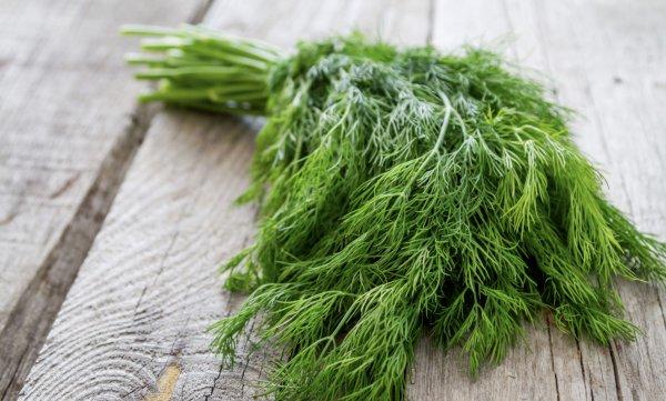 Семена укропа полезные свойства для мужчин