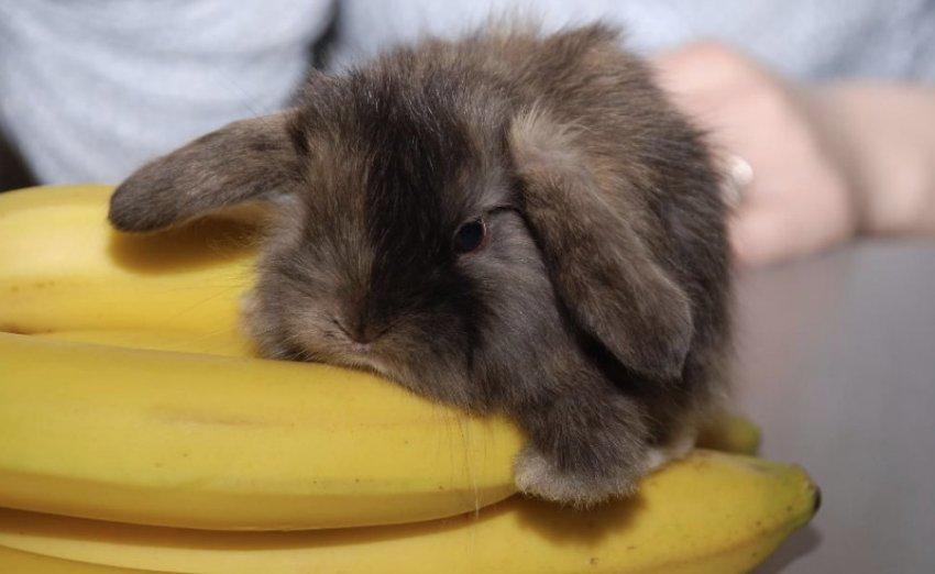 Кролик и бананы