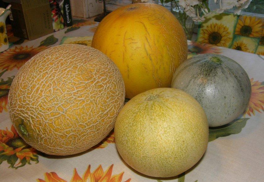 Как выбрать спелую и сладкую дыню при покупке