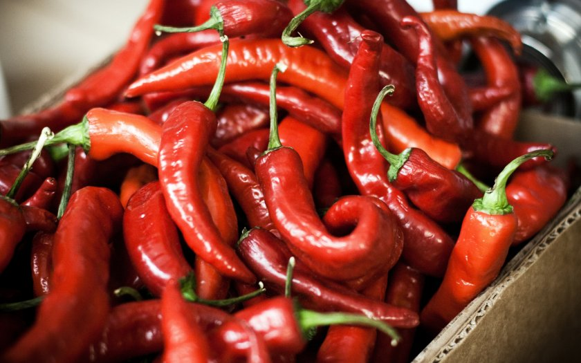 Как отобрать и подготовить горький перец для заготовок