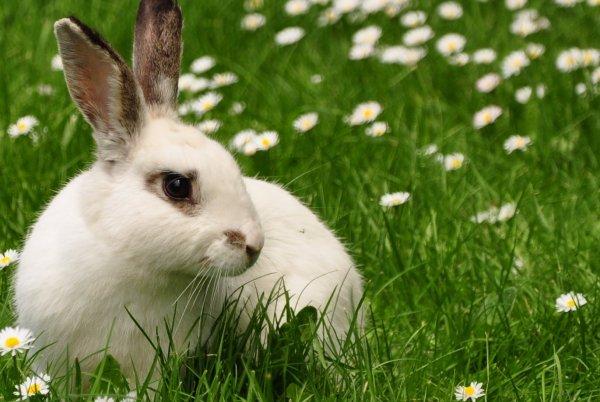 Гноение глаз у кроликов