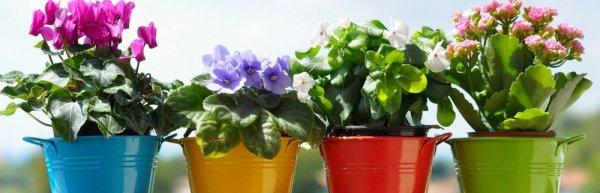 Как правильно посадить в горшок цветок