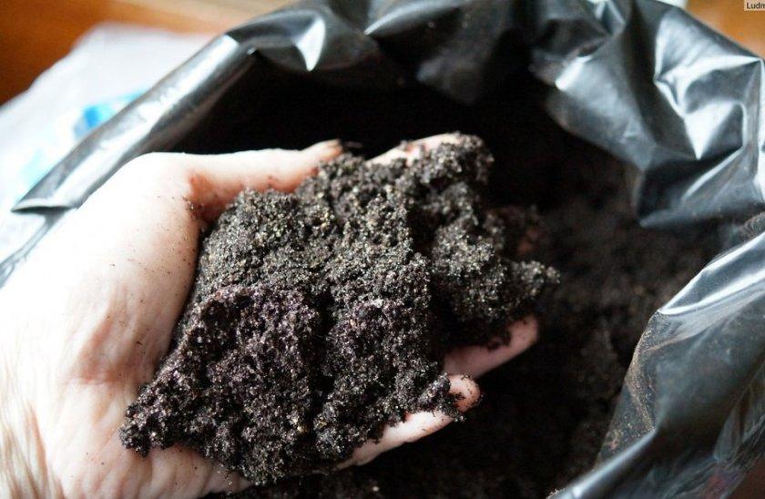 Выбор и подготовка почвы