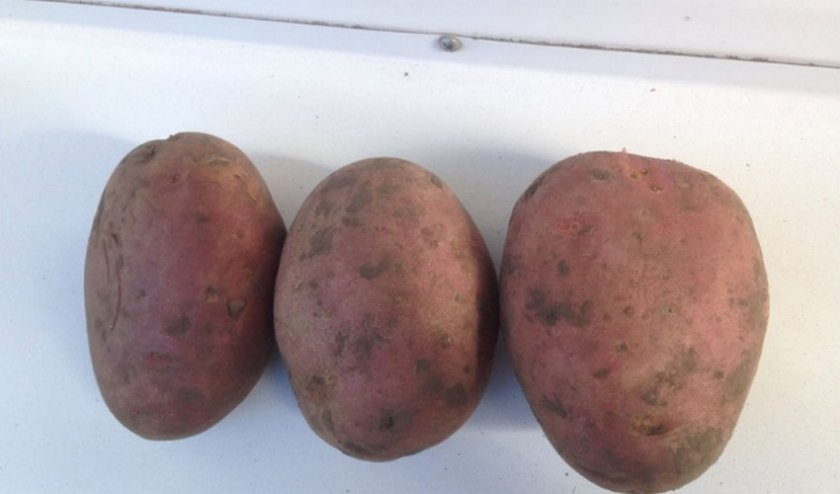 Картофель Лабелла