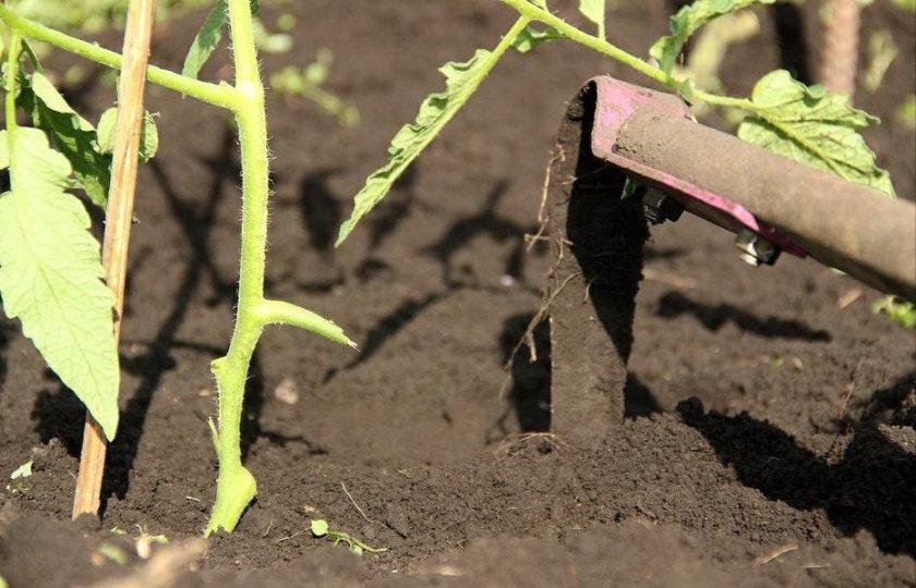 Рыхление и прополка почвы