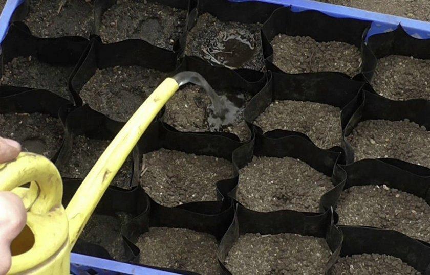 Посев семян огурцов на рассаду