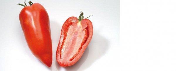 Томат Корнабель характеристика и описание сорта урожайность отзывы фото