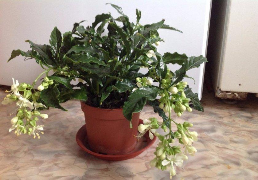 Подготовка к цветению и период покоя