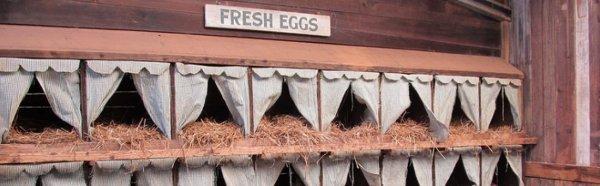 Чертеж гнезда для кур-несушек с яйцесборником своими руками. Как сделать гнезда для кур несушек с яйцесборником?