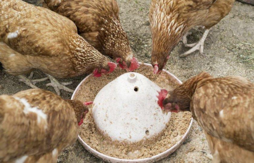Питание кур