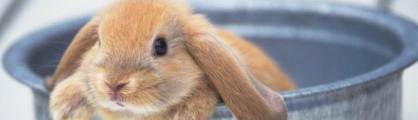 Как мыть кролика полезные советы