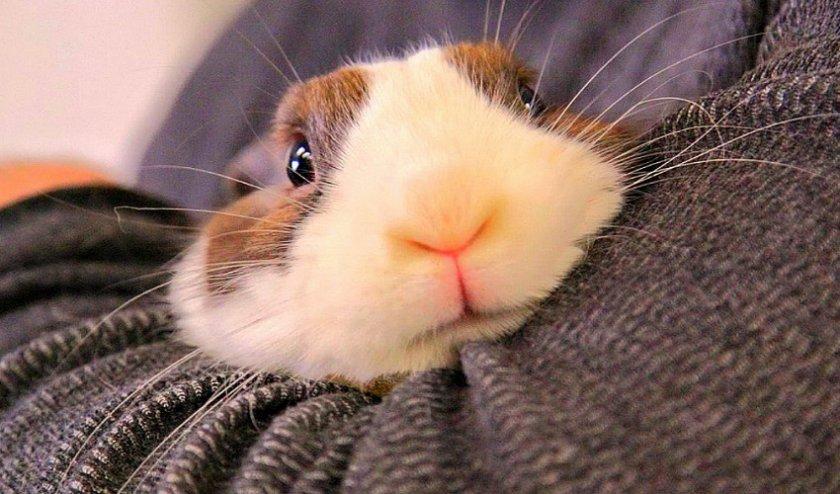 Мытье кролика