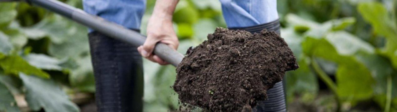 обработка почвы от вредителей в теплице