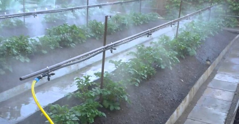 Дождевание в теплице