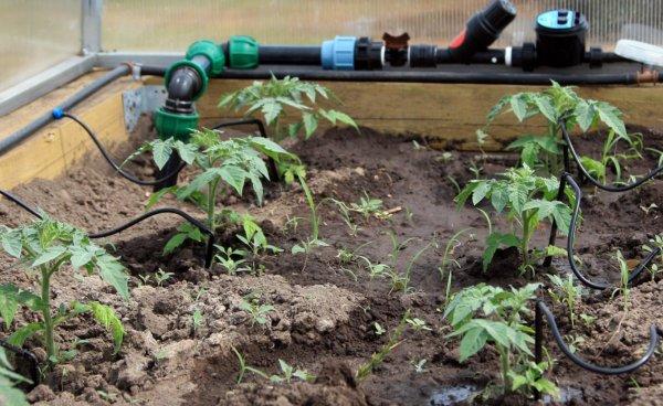 Самотечная система полива огорода и теплицы своими руками