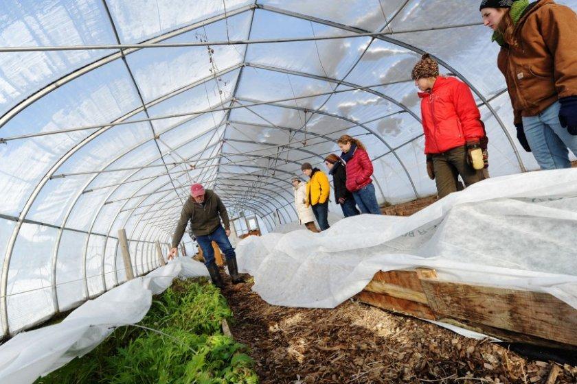 Что можно выращивать в неотапливаемой теплице зимой?