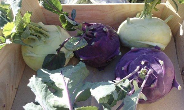 Капуста кольраби когда собирать урожай