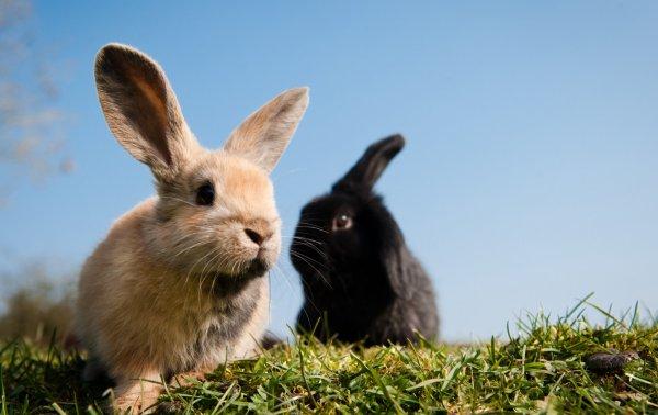 Почему у кроликов опухают глаза и уши