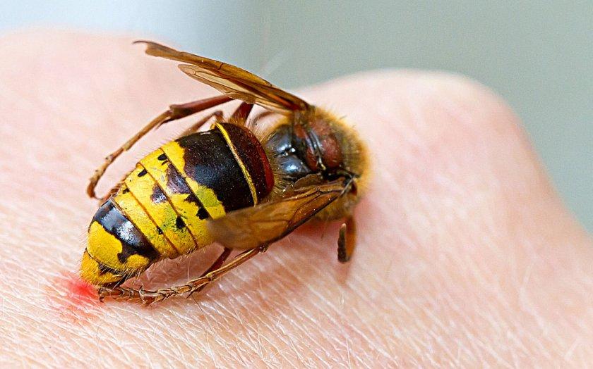 Пчела кусает