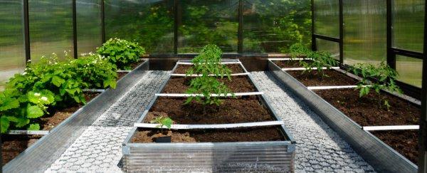 Размещение грядок в теплице 3х4. Как правильно расположить растения в теплице. Видео — Обустройство грядок в теплице и подготовка почвы к посеву