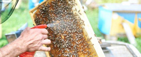 Дым пушка «Варомор» для обработки пчел: лечебные растворы и эксплуатация, схемы, чертежи