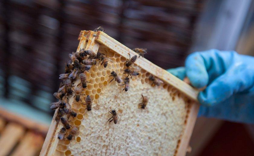 Мёд с улья