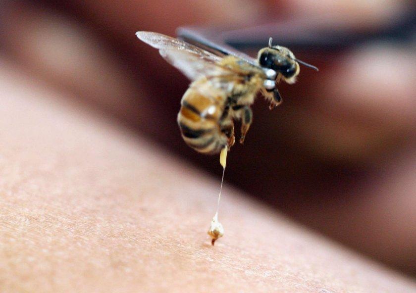 Свойства пчелиного яда
