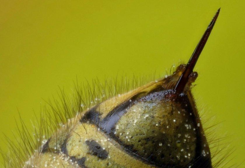 Что такое пчелиный яд