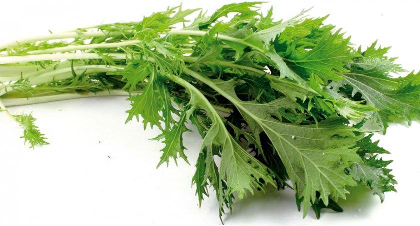 Лучшие сорта японской капусты для выращивания из семян