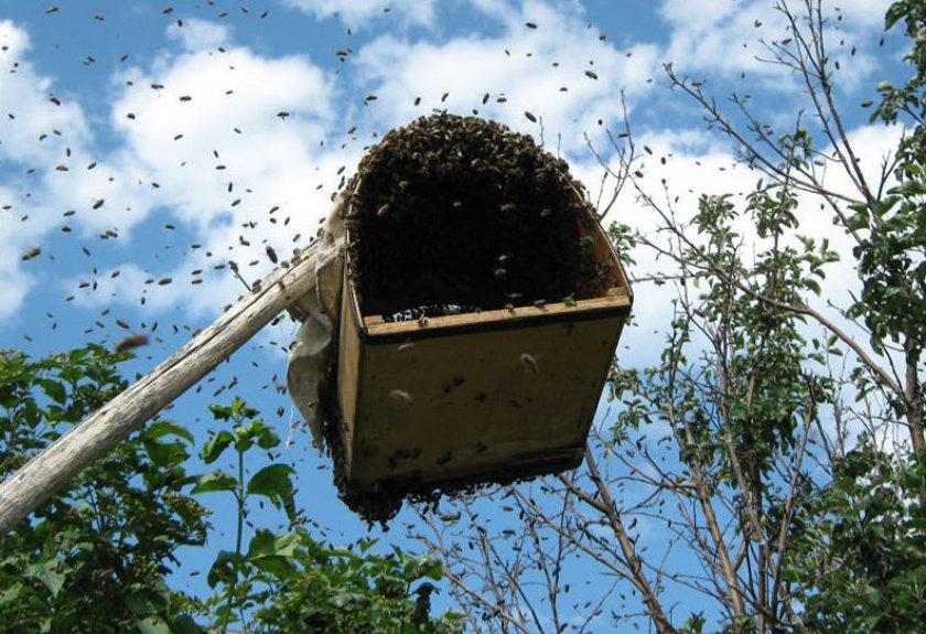 Как ловить пчел