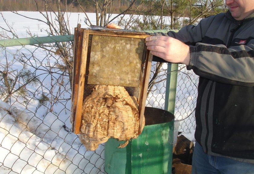 Ловушки для пчёл