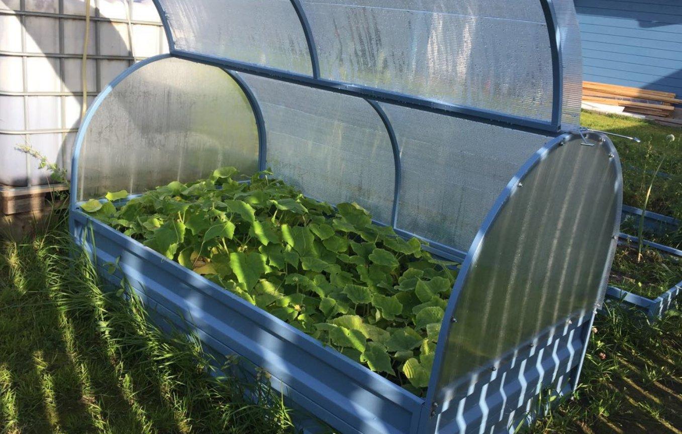 выращивание огурцов в низком парнике 80 см