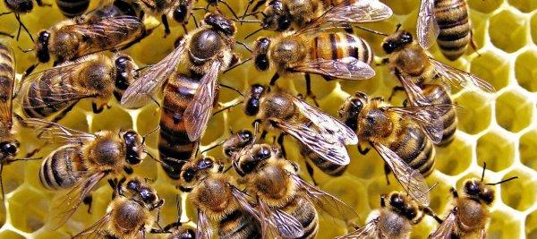 Место зимовки пчел