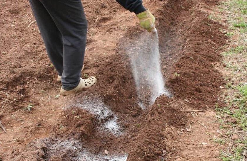 Обработка почвы древесной золой
