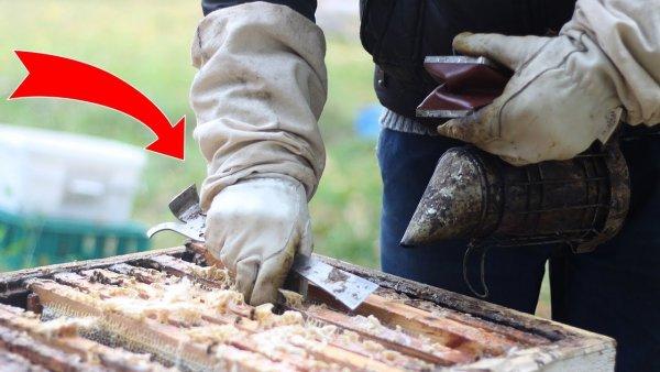 Как правильно обработать пчёл от клещей? || Смотреть термообработка пчел от клеща