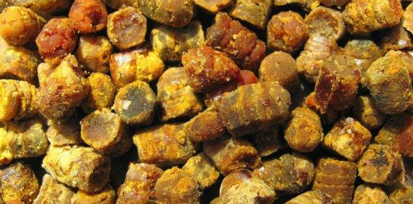 Перга пчелиная: что это такое, полезные свойства и вред, показания и противопоказания для применения, схема приема и ограничения