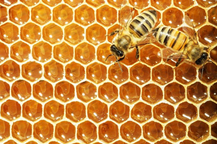 Пчелиные