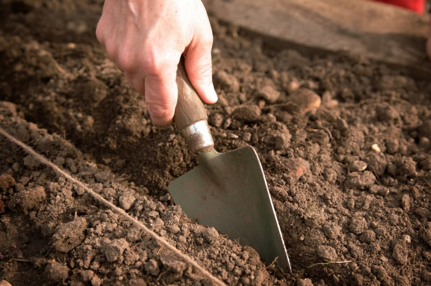 Требовательность культуры к составу и структуре почвы