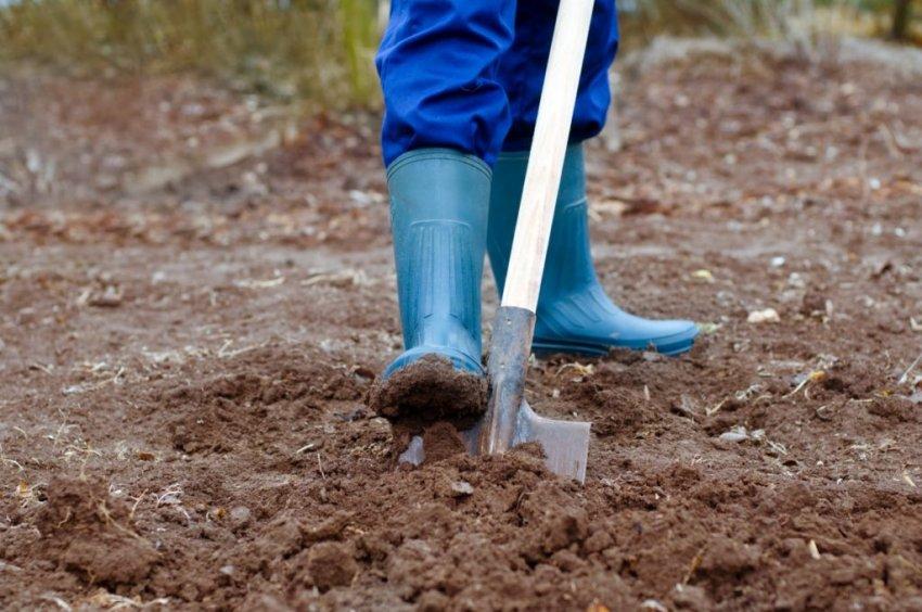 Технология осенней и весенней обработки грунта под посадку