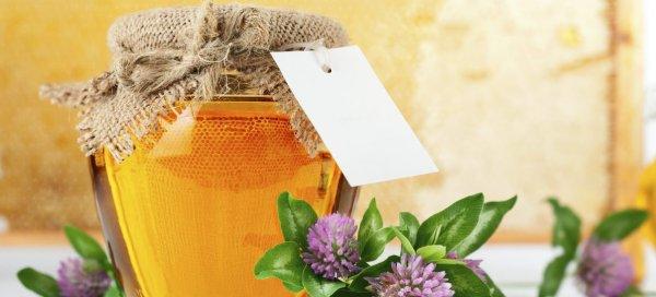 Полезные свойства меда из клевера