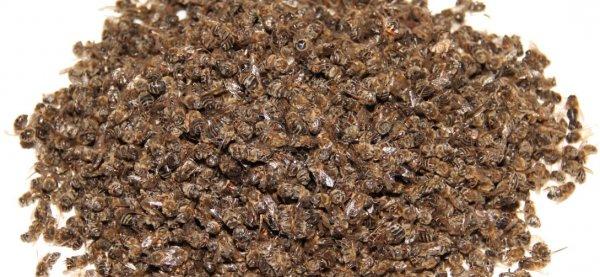Подмор пчелиный настойка на спирту применение