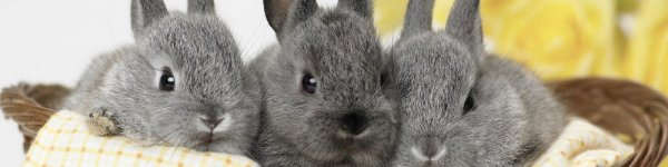 Состав комбикорма для кроликов: делаем своими руками в домашних условиях   видео