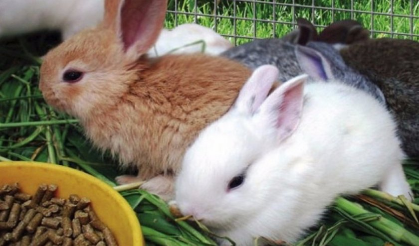 Хороший комбикорм для кроликов