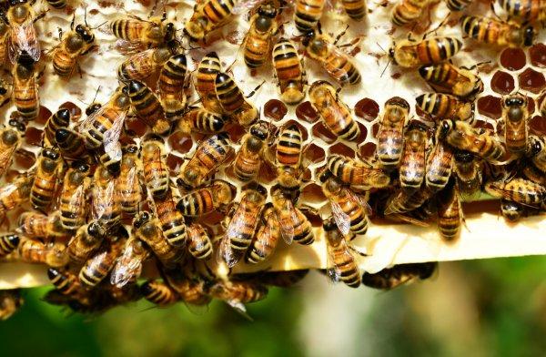 Как избавиться от соседских пчел